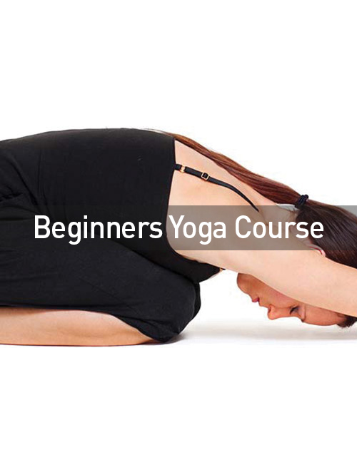 beginners guide to yoga and meditation