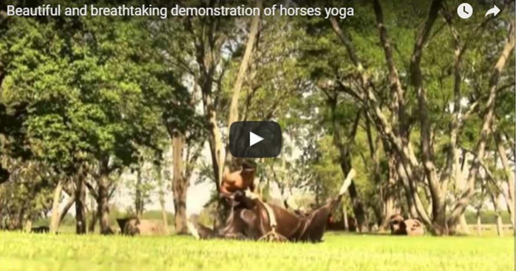 Horse Yoga – I Have No Words To Describe This